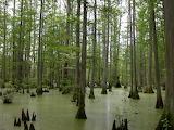 mangrove forest,Illinois