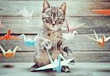 Gat i Ocellets - Cat and Birds