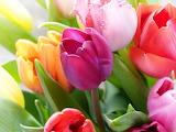Spring Flowers @ Pixabay...