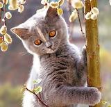Adorable Kitten...