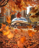 Autumn in Millenium Park