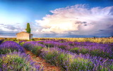 Impending storm over the lavender fields