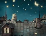 ^ Cats stars moon