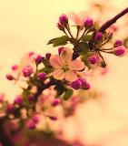 Anabellstar, Spring Blooms