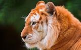 Animals wildlife nature (349)