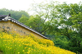 House, flower meadow, yellow flowers, forest, trees, nature