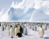 Pinguinos-