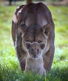 Cub & momma