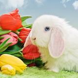 ☺ Cute bunny...