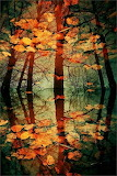 #Reflection- Pinterest