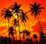 #Orange Palm Sunset