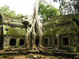 Ta-phrom-trees-top-10-trees