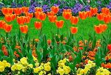 Flors - Flower