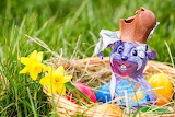 Easter, chocolate bunny, bitten, eggs, basket, flowers