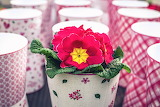 Primroses-flowers-spring-cups-pink-color