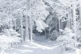 Snow fairy tale