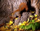 Wiewiórka w Łazienkach
