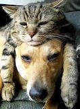cozy cat hat