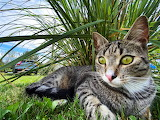 Lounging in the grass