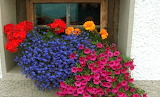 Flowery window