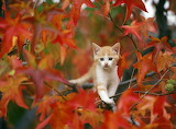 Kitten in Autumn Tree
