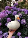 duck-pics-20-5da038bf5a763 700