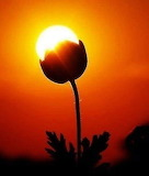 Flor atardecer