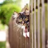 Hanging on the Fence...