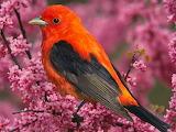 ☺ Beautiful bird...