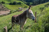 donkey in Basque Country