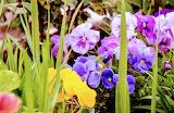 Flores 806