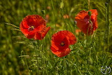 Kwiaty - foto- Ewa Gajewska