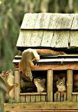 """Animals tumblr mohnblumesworld """"Squirrel Hotel"""""""
