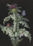"""Flowers tumblr dogstardreaming Thistle """"""""Barbara Regina Dietzsch"""