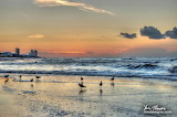 Birds playing in the surf at sunrise