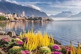 City, buildings, lake, mountains, flowers, clouds, landscape