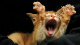 """""""Hear Me Roar"""" !"""
