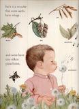 from Wonders of Nature Big Golden Book ~ Eloise Wilkins