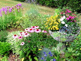 Petit massif de fleurs