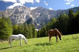 horses-farming
