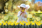 Easter, little girl, hat, chick, daffodil field, flowers, trees