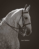 Saddlebred 1621