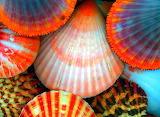 SeashellColors