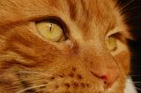 Cat-face