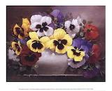 Rainbow-of-pansies