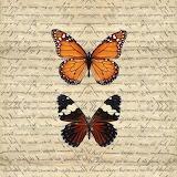 vintage-butterflies-reflection-kevin-sean-oconnell