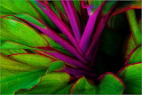 #Purple Leaf Abstract by Christopher Martin