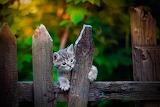 Cat, fence, baby, kitty, kitten, nature