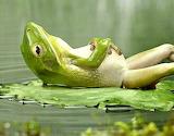 Weekend Frog