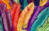 Colorful feather 001013